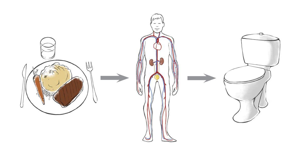 Wenn Ihre Nieren versagen